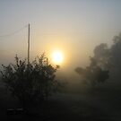 one misty morning Kennedy, North Queensland, AUstralia by myhobby