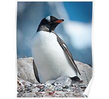 Gentoo Penguin with 2 chicks, Antarctica Poster