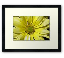 yellow flower in close up Framed Print