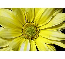 yellow flower in close up Photographic Print