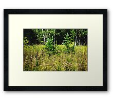 Forest Sisters Framed Print