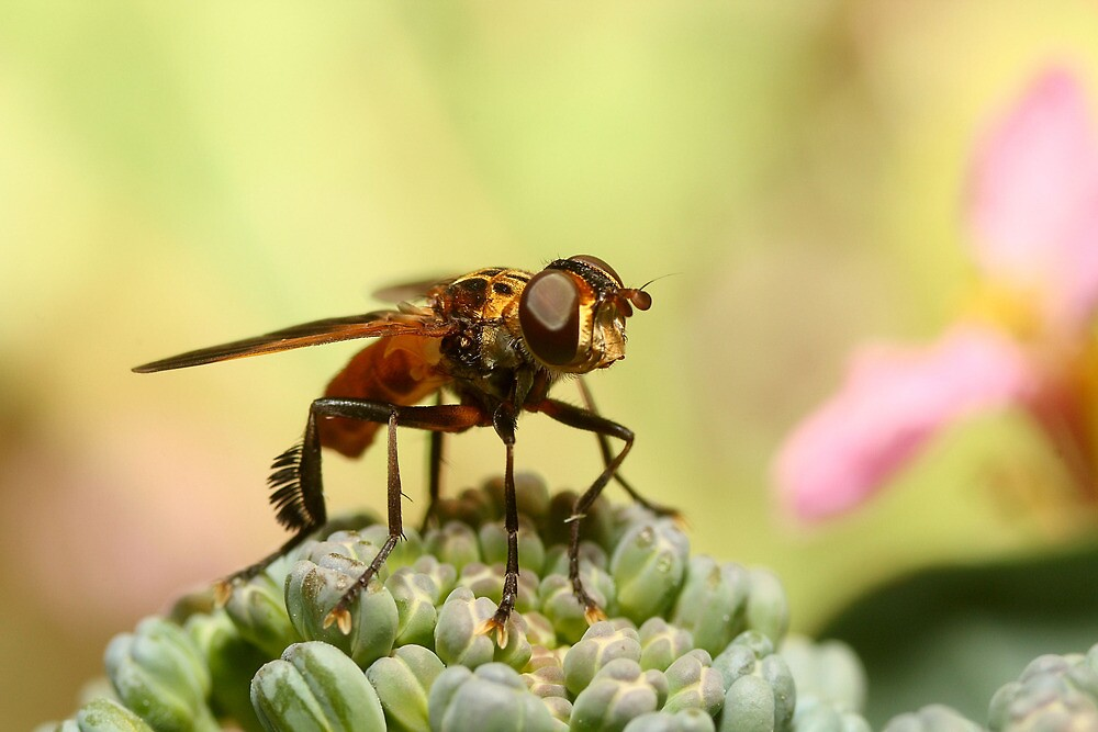 Biological Warfare by burnettbirder