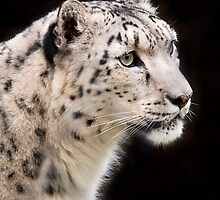 Wild Faces: Snow Leapod by Christopher Ashdown