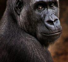Wild Faces: Silverback Gorilla by Christopher Ashdown