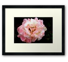 Lightly rouged Framed Print