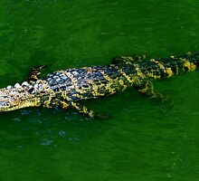 Long Gator by Cynthia48