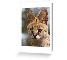 Wild Faces: Serval Greeting Card