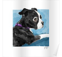 Boston Terrier watercolor Poster