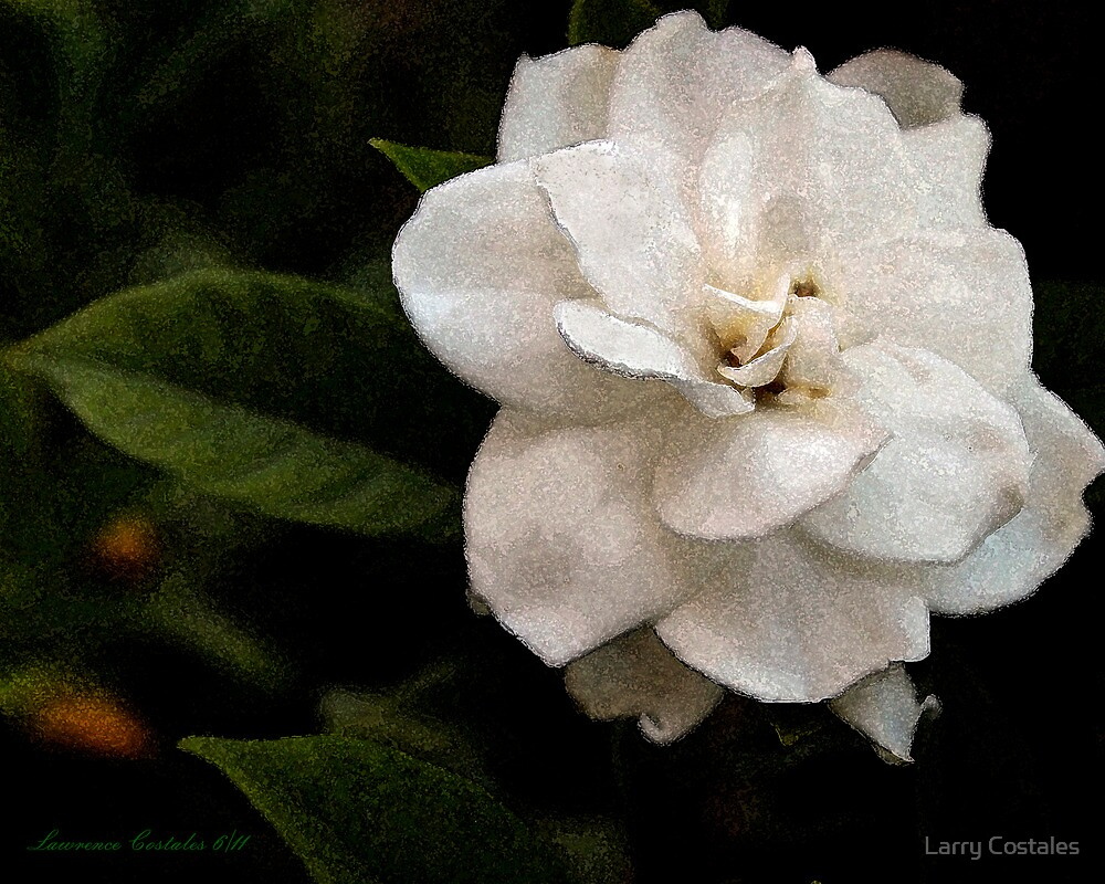 Orange Blossom by Larry Costales