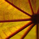 Leaf from another side by Antanas