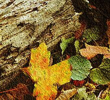 True Beauty of Fall © by Dawn M. Becker