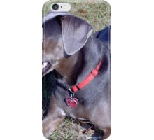Awesome Blue Lacy Dog iPhone Case/Skin