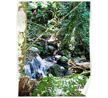 Bubbling Waters on Mt Warning Poster
