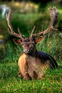 Fallow Deer 2.0 by Yhun Suarez