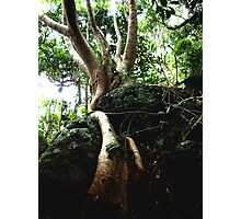 FigTree Roots to Rock Photographic Print