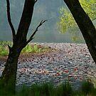 Jubilee Lake,Daylesford by Joe Mortelliti