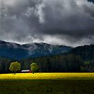 Field of Mustard by Charles &amp; Patricia   Harkins ~ Picture Oregon