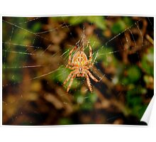 Garden Orb Spider, Poster