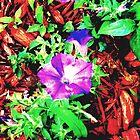 """""""Flowers in the Dirt"""" by Anthony Cherubino"""