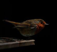 Robin red by Nigel  Dean