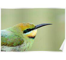 Rainbow Bird Poster