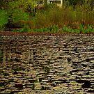 Lilies, Jubilee Lake, Daylesford by Joe Mortelliti