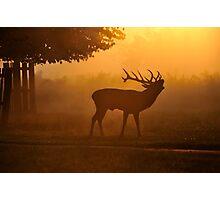 Red Deer Rut Photographic Print