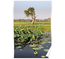 Yellow Water Wetlands - Kakadu, Northern Territory, Australia Poster
