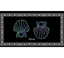 Pecten jacobaeus - Scallop Photographic Print