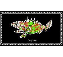 Scorpaena scrofa -  Red Scorpionfish Photographic Print