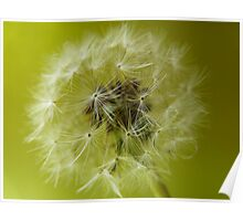"""Sphere""  Seeds of the Dandelion Plant Poster"
