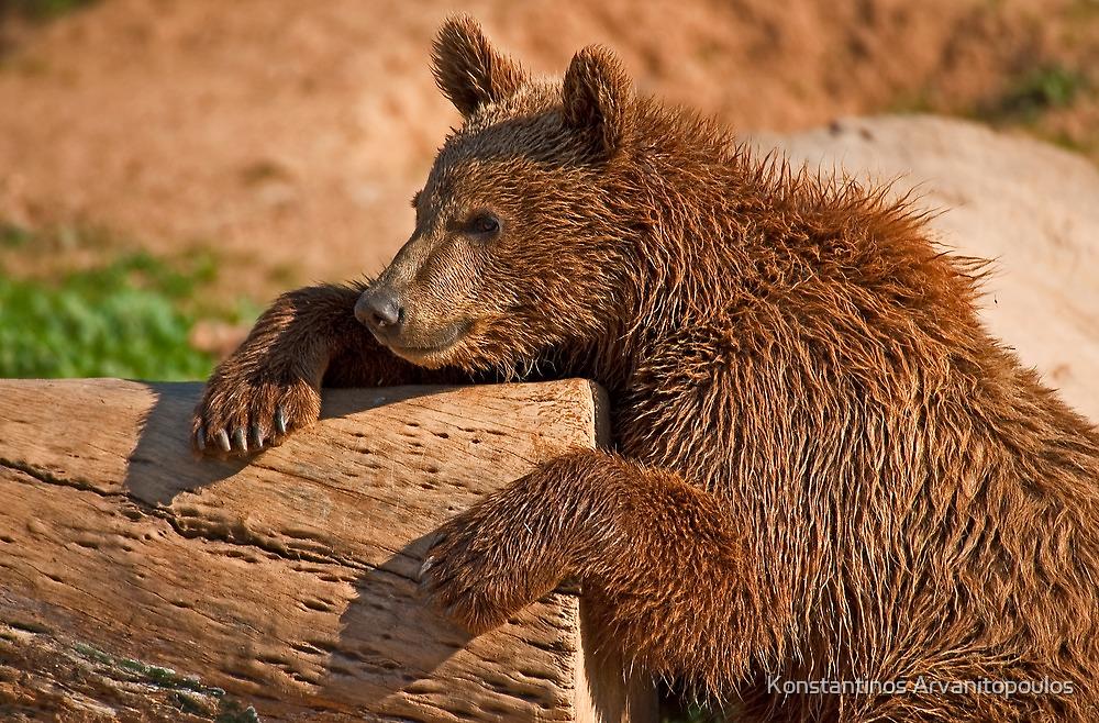 Teddy bear (II) by Konstantinos Arvanitopoulos