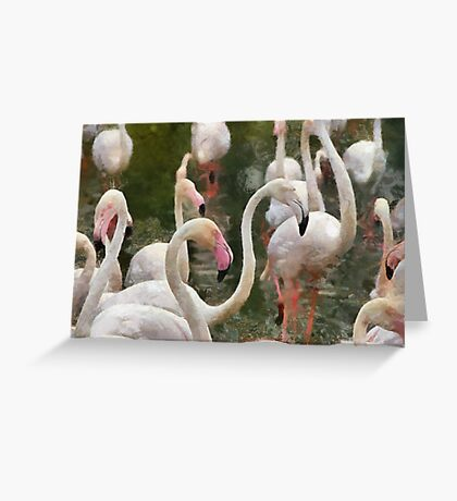 Greater pink Flamingos  Greeting Card