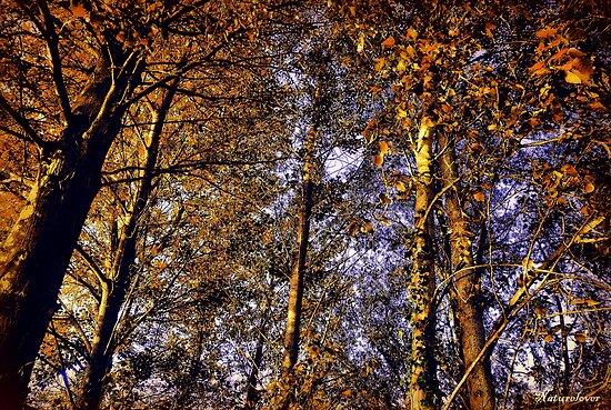 Autumn Sunlight by naturelover
