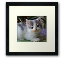 Ta Dah, introducing Lacy's kitten...Shiver! Framed Print