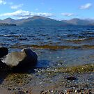 The Rocky Shore Panorama by Susan Dailey