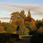 Autumn View by GlennB