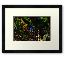 insect on the flower Framed Print