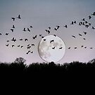 Guided by the Moon by Larry Trupp