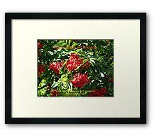Red Rowan Berries Christmas Card Framed Print