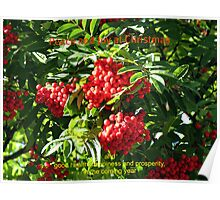Red Rowan Berries Christmas Card Poster