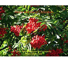 Red Rowan Berries Christmas Card Photographic Print