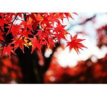 Autumn colours  Photographic Print