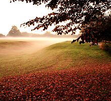 Dawns Misty Light by GlennB