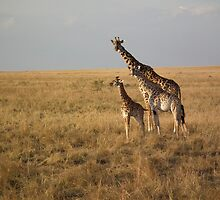 A family of Giraffes  by Sophie  Beckerman