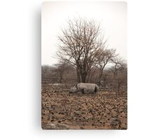 a sad scene in the bush Canvas Print