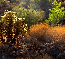 Sonoran Glow by Sue  Cullumber