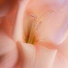 Peach Blush by Ann Garrett