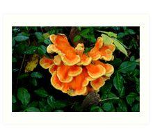 Sulphur Shelf fungus Art Print