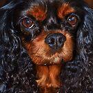 Maudee The Cavalier  by Liza Barlow
